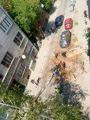 """""""След поредните ремонти и смяна на кабели по ул. """"Шишман"""" брезите по тротоара рязко изсъхнаха. Не знам дали са им прекъснали корените, или по друг начин решиха да се отърват от малкото зеленина наоколо, но резултатът от действията им не закъсня"""", пише Йорданка Свиленова"""
