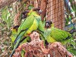 Читателска фотогалерия: Светът на птиците