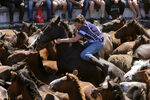 Фотогалерия: Да подстрижеш див кон