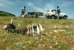 Фотогалерия: За един трабант и няколко лешояда повече