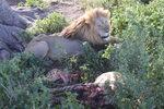 Читателска фотогалерия: Танзания - Animal planet на живо