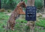 Фотогалерия: Колко животни живеят в лондонския зоопарк