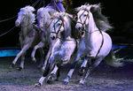 Фотогалерия: Фантастичният спектакъл на конете