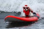 """Фотогалерия: """"Сърф-а-тон"""" за кучета"""