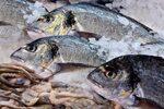 Фотогалерия: Прясна риба и специалитети с морски дарове на Фиш фест