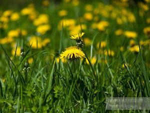 Фотогалерия: Пролет в зелено