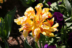Фотогалерия: Разходка из Ботаническата градина в Балчик