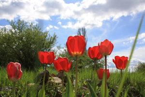 Фотогалерия: Пролетно настроение