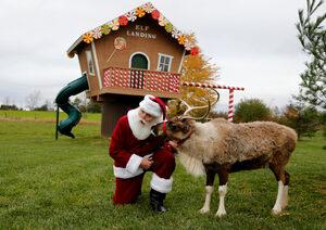 Учени разкриха защо елените на Дядо Коледа не се смеят на червеноносия Рудолф