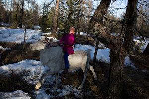 Фотогалерия: Монголските пастири на елени