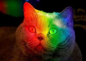 Снимка на деня: Котка в цветовете на дъгата