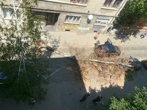Снимка на деня: Дърво падна върху коли в София