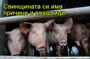 Свинщината си има причини и опашчици...