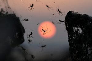 Фотогалерия: Километър паяжина