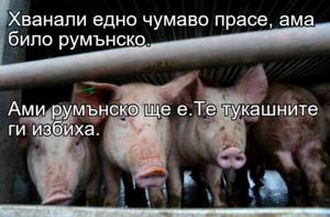 Хванали едно чумаво прасе, ама било румънско. Ами румънско ще е.Те тукашните ги избиха.