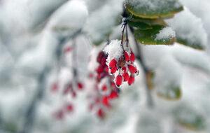 Фотогалерия: Сняг покри България