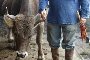 Фотогалерия: Да имат ли швейцарските крави рога