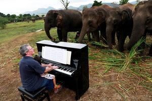 Фотогалерия: Музика за пенсионирани слонове