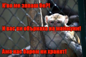 К'во ме зяпаш бе?! И вас ви обърнаха на маймуни! Ама нас барем ни хранят!