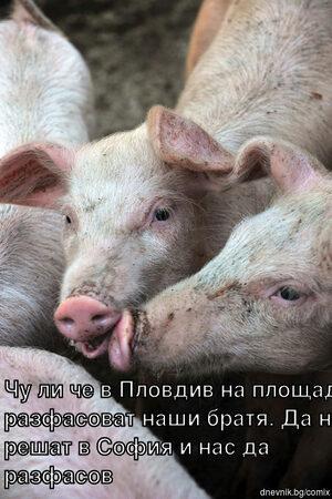 Чу ли че в Пловдив на площада  разфасоват наши братя. Да не  решат в София и нас да  разфасов