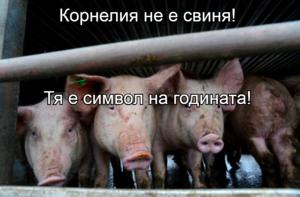 Корнелия не е свиня! Тя е символ на годината!