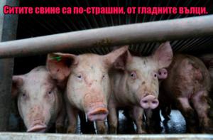 Ситите свине са по-страшни, от гладните вълци.