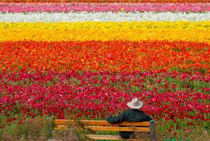 Фотогалерия: Цветните полета на Калифорния