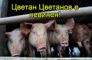 Цветан Цветанов е невинен!