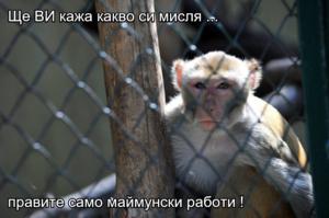 Ще ВИ кажа какво си мисля ...  правите само маймунски работи !