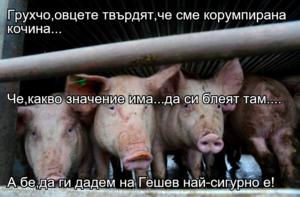 Грухчо,овцете твърдят,че сме корумпирана кочина... Че,какво значение има...да си блеят там.... А бе,да ги дадем на Гешев най-сигурно е!