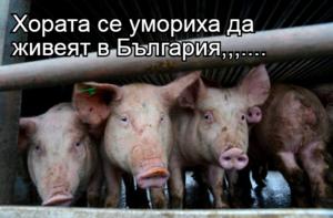Хората се умориха да живеят в България,,,....