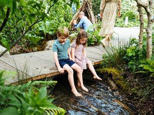 """Снимка на деня: """"Необятна горска градина"""" от Кейт Мидълтън"""