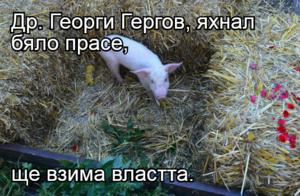 Др. Георги Гергов, яхнал бяло прасе,  ще взима властта.