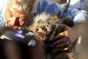 Снимка на деня: Най-грозното куче за 2019