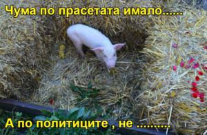 Чума по прасетата имало......   А по политиците , не ..........