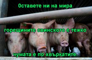 0ставете ни на мира горещините свинското е тежко чумата е по хвъркатите.