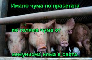 Имало чума по прасетата       по голяма чума от комунизма няма в света.