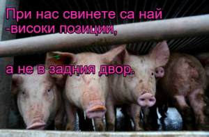 При нас свинете са най -високи позиции, а не в задния двор.