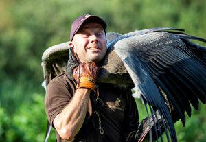 Снимка на деня: Как се тренира кондор