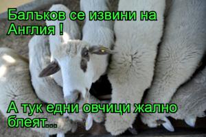 Балъков се извини на Англия !  А тук едни овчици жално блеят...