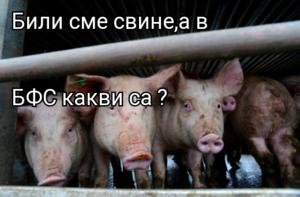 Били сме свине,а в БФС какви са ?