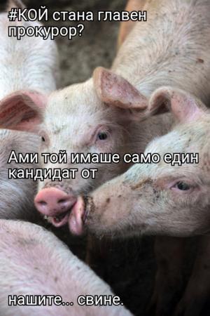 #КОЙ стана главен прокурор? Ами той имаше само един кандидат от нашите... свине.