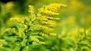 Кои билки е забранено да се берат тази година