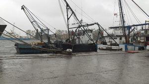 Kвотата за улов на калкан в Черно море ще бъде увеличена с над 30%