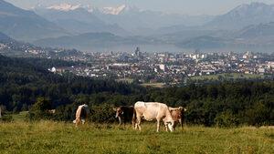 Производството на месо вреди на климата колкото и добива на петрол