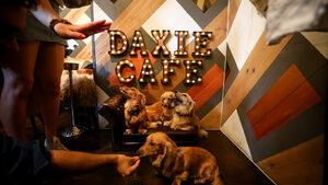 Фотогалерия: Лондонско кафене за дакели