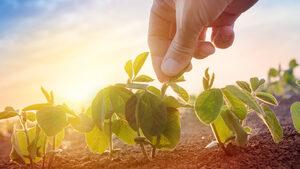 Близо 10 млрд. лв. прибраха едрите земеделци за година