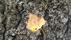 Настъпващата есен