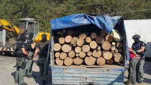 Интерпол и природозащитници: престъпленията срещу природата са трети по приходи