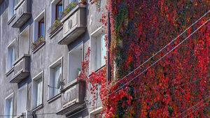 Фотогалерия: Цветовете на есента